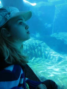Sophie watching the beluga whales -- still after 20 minutes.